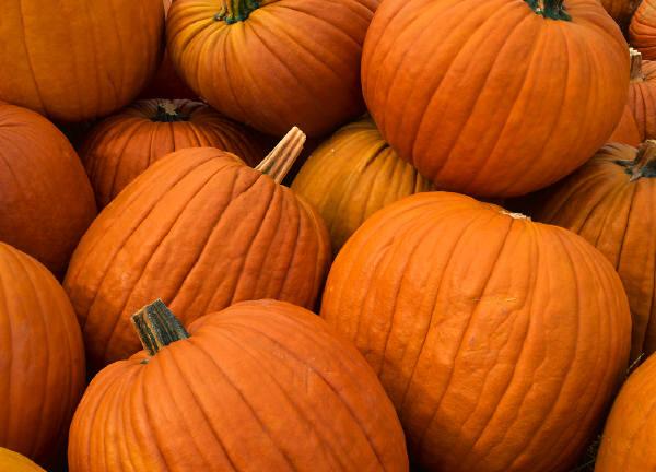 the-perfect-pumpkin-patch-munch-pumpkin-seeds-by-carina-sohaili-1